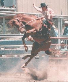 L'homme sur le banc des accusés! rodeo