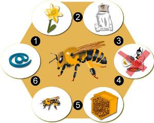 Qu est ce qui est en train de tuer nos abeilles le syndrome d effondrement des agricultiver - Qu est ce qui fait fuir les abeilles ...