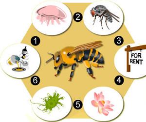 Qu est ce qui est en train de tuer nos abeilles le - Qu est ce qui fait fuir les abeilles ...